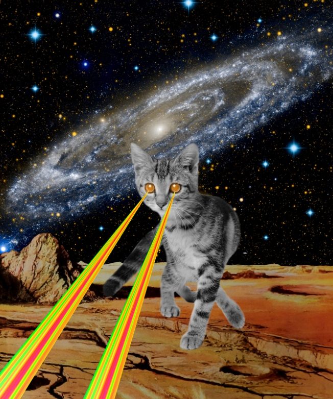 br_collage_cat attack_gloriasanchez.jpg
