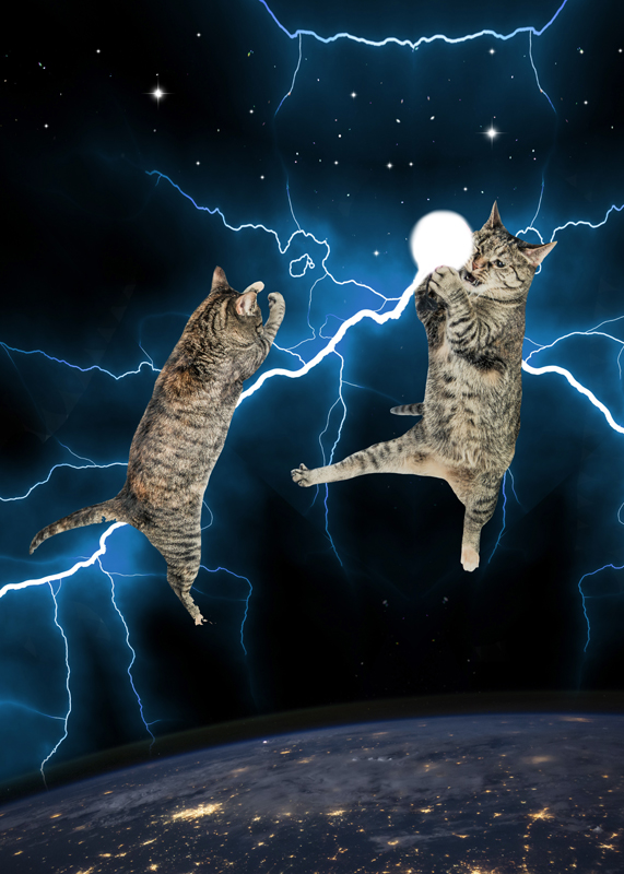 br_Collage_cat fight_gloria sanchez