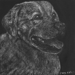 nancy8animalportraitsscratchboard